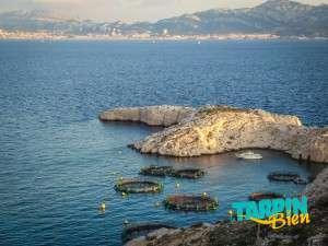 archipel du frioul - Port de Pomègues