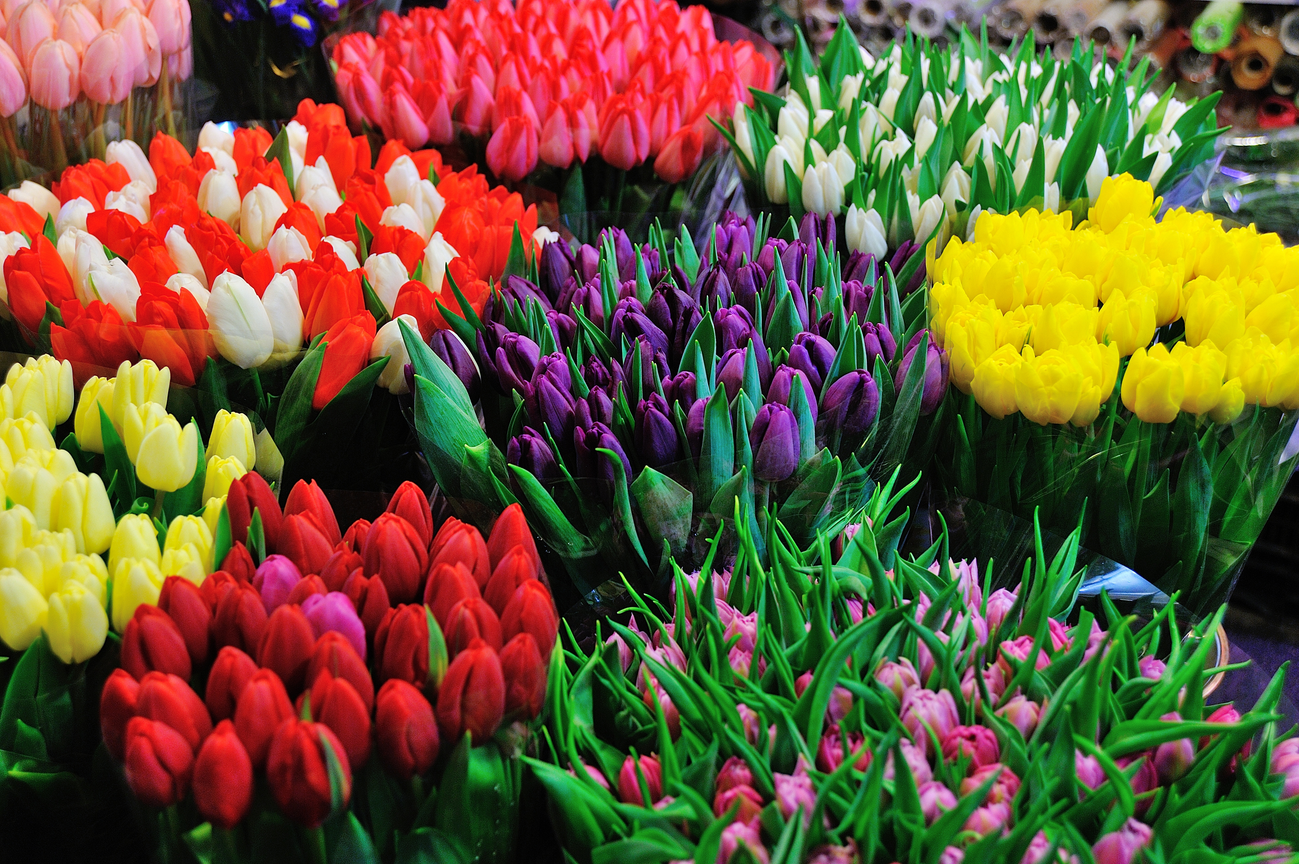 Marche Aux Fleurs Reformes Tarpin Bien